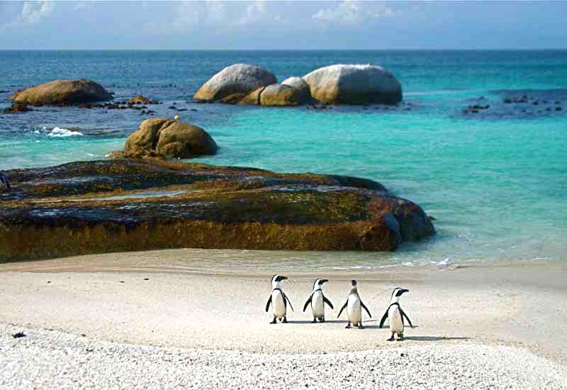 South Africa Cape Town Penguins