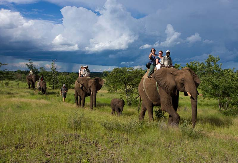 Riding Elephants Zimbabwe
